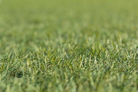 pasto sintetico: verde césped artificial tiro bajo hacia abajo y de cerca con poca profundidad de foco.