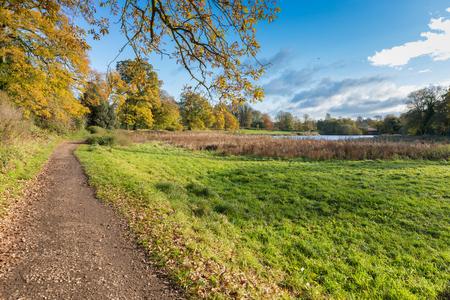 秋葉暖色美しい晴れた日に公園で