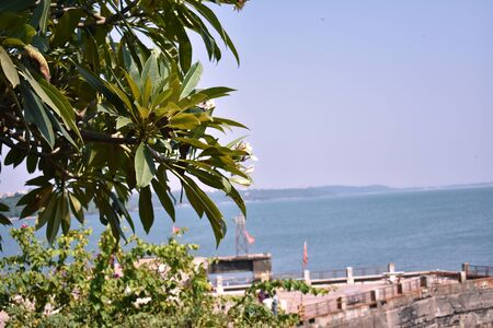 selective focused on tree in foreground in Dona paula, Goa 版權商用圖片