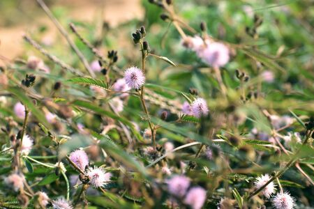 small pink flowers commonly found in bush
