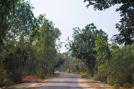 a empty road between a dark forest in Bankura