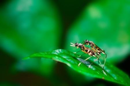insectos insectos de apareamiento Foto de archivo - 20667543