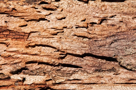 Closeup of texture of termite damaged wood