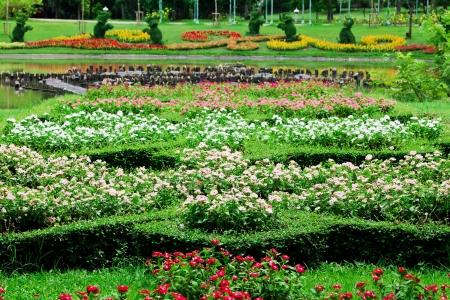カラフルな花壇 写真素材