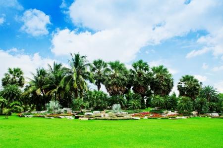 palm garden: Beautiful palm garden