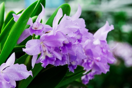 dark pink orchid flowers