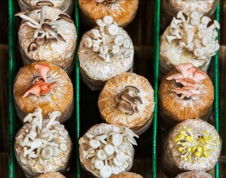 Mushrooms Growing In A Farm