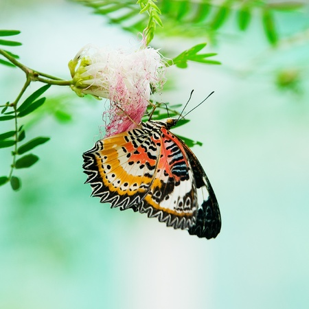 Butterfly nectar  photo