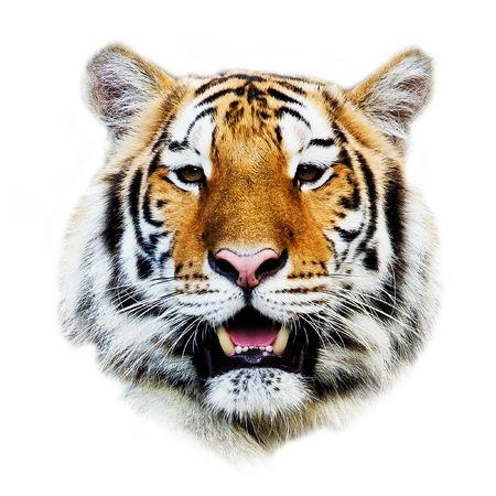 állat fej: tigris