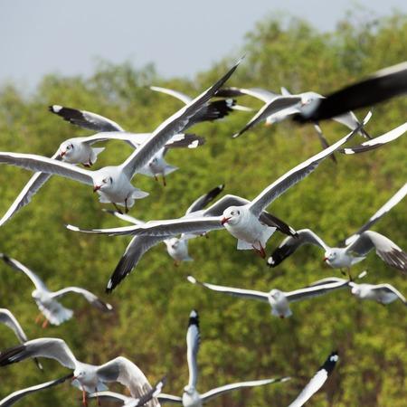 Seagull ist ein Vogelzug nach Thailand