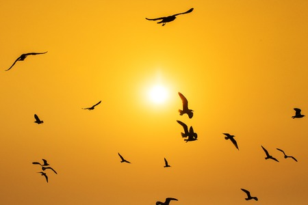 Tranquil scene with seagull flying at sunset Stock Photo