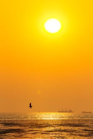日没で飛んでいるカモメの静かな情景 写真素材