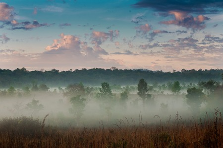 Morning mist and sky  photo