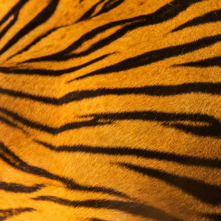fur: beautiful tiger fur - colorful texture with orange, beige, yellow and black Stock Photo