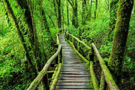 KA: Beautiful rain forest at ang ka nature trail in doi inthanon national park, Thailand Stock Photo