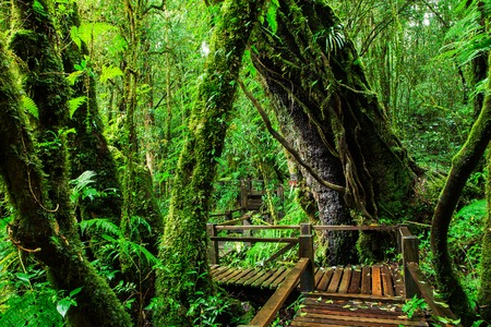 Beautiful rain forest at ang ka nature trail in doi inthanon national park, Thailand Stock Photo - 32055890
