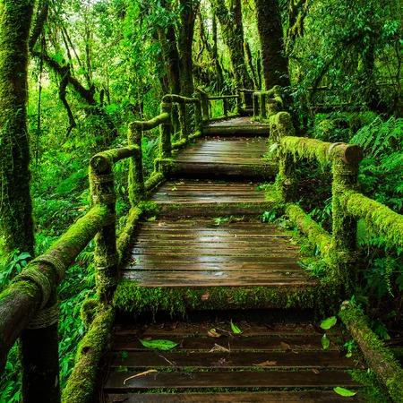 Beautiful rain forest at ang ka nature trail in doi inthanon national park, Thailand Stock Photo