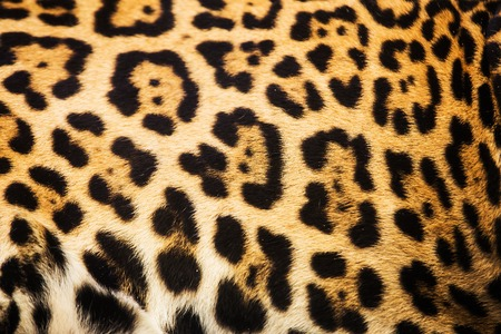 Close up leopard spot pattern texture background Imagens