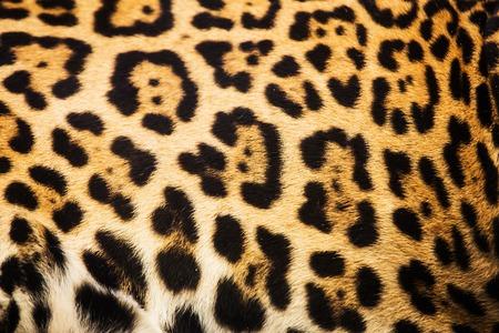 Close up leopard spot pattern texture background Stock Photo