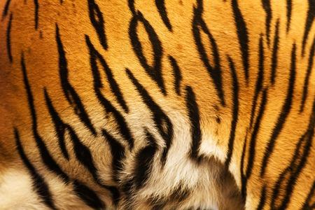美しい虎の毛皮のオレンジ ベージュの黄色と黒のカラフルなテクスチャ 写真素材