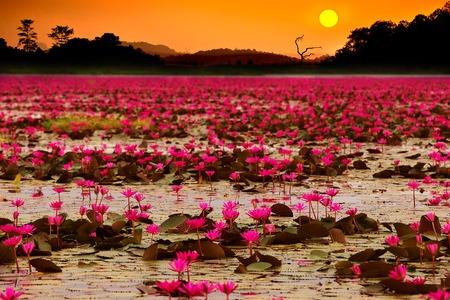夕焼けの海でレッドロータス