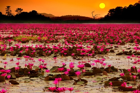 Sunset at Sea Red Lotus Imagens