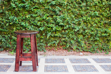 ivy wall: wooden benches with ivy on the wall in the background Stock Photo