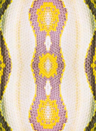 constrict: Real boa snake skin texture closeup