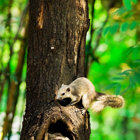clinging: Squirrel animal clinging to a tree in nature.