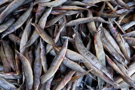 food preservation: Dried fishes  famous seafood Thailand for  food preservation