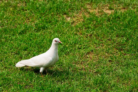 Seagull standing on green grass in nature Stock Photo