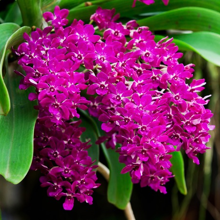 Beautiful purple orchid on tree in nature