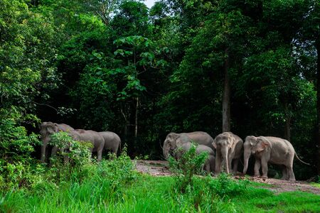reserve: Thai elephants animals  in forest nature at Khao Yai Stock Photo