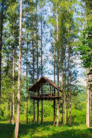 High seat in the forest in Thailand Stock Photo
