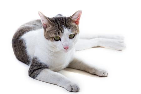 Beautiful cat on white background.