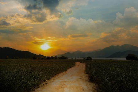 Entrance pineapple farm at sunset on the mountains. Stock Photo