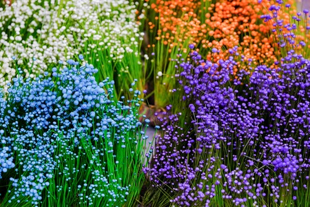 close up colorful small grass flower background, Small wild white flowers and purple flowers in the grass in the daytime in the summer, variety rainbow color background in garden