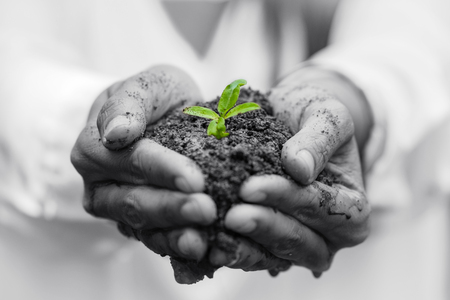 earth handful: Hands holding a green young plant and light. Stock Photo