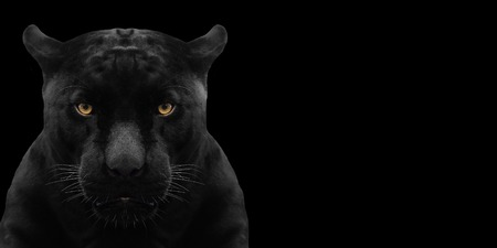 black panther shot close up with black background Archivio Fotografico