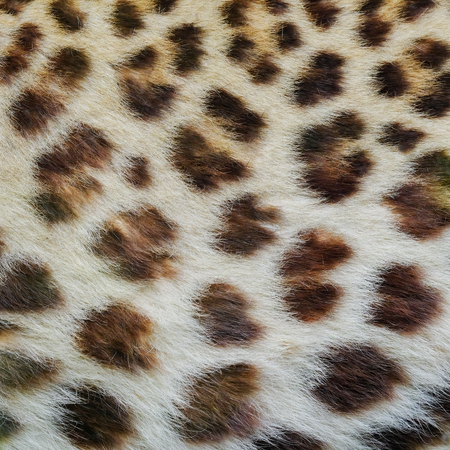 Jaguar, leopard and ocelot skin texture.