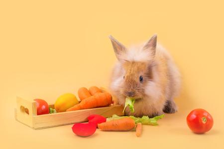 Rabbit and pickup, put vegetables on an orange background