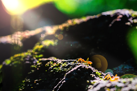 Ants are one of the beauty of nature on sunset Stock Photo