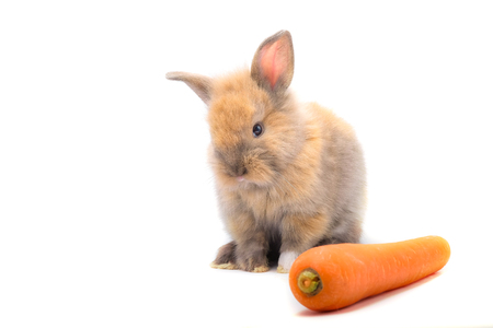 Rabbit and vegetables and white background isolate