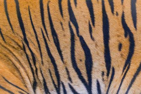 Cerrar fondo de textura de piel de tigre Foto de archivo