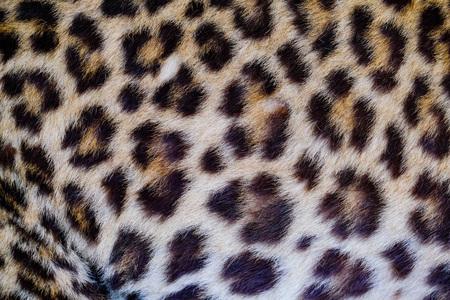 Fond de texture de peau de léopard et d'ocelot