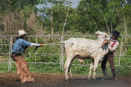 Asian cowboy 2 men caught cattle in livestock