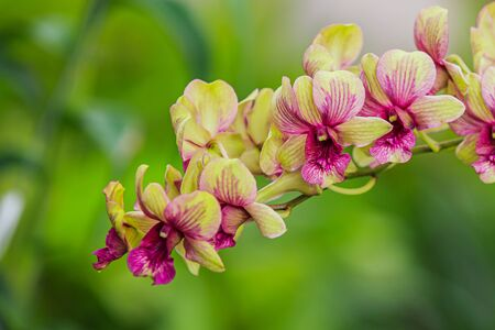 Purple orchids in the garden Stockfoto