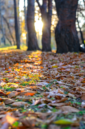 Fallen leaves on the grass in a park in the rays of the low sun. photo