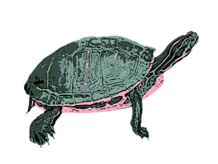 Green water turtle. Isolated against white background. Illustration. Stock Illustration - 1253760