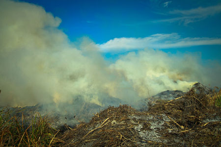 heat loss: Dry grass burning in the early spring. Burning wood, peat, tragedy and disaster in the field. Background